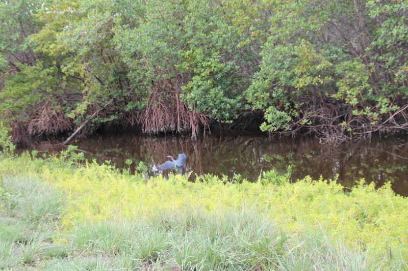 Le merveilleux voyage en Floride de Brenda et Rebecca en Juillet 2014 - Page 20 10011