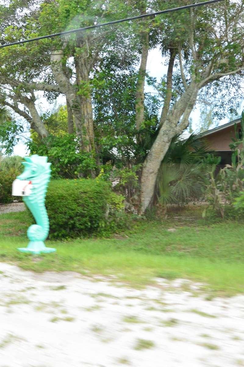 Le merveilleux voyage en Floride de Brenda et Rebecca en Juillet 2014 - Page 20 10111