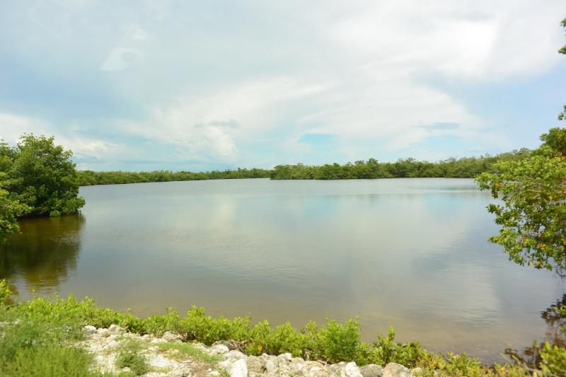 Le merveilleux voyage en Floride de Brenda et Rebecca en Juillet 2014 - Page 20 1613