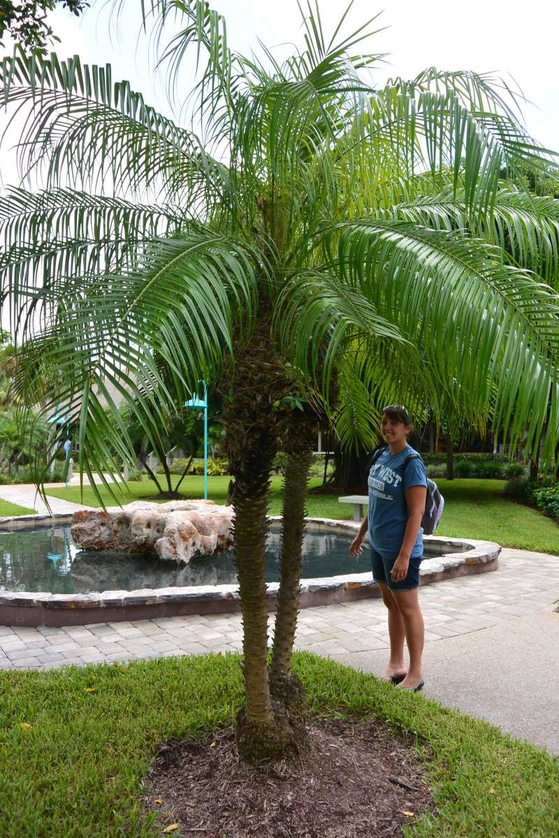 Le merveilleux voyage en Floride de Brenda et Rebecca en Juillet 2014 - Page 19 2812
