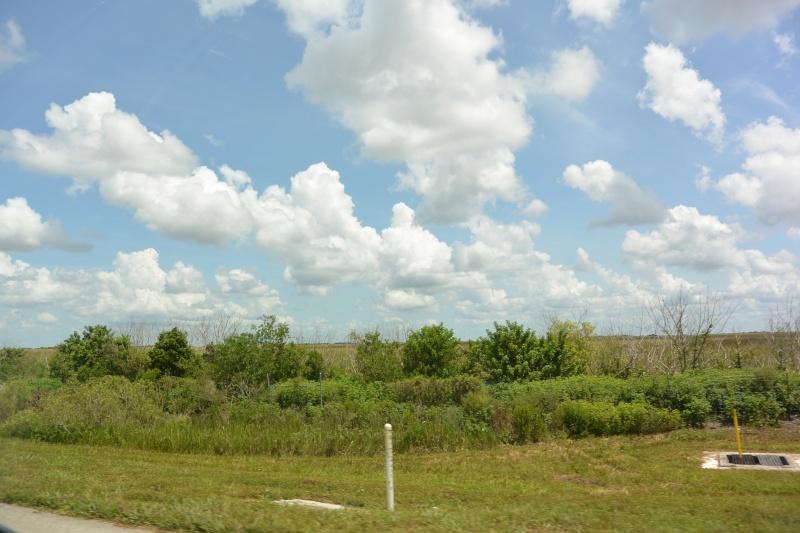 Le merveilleux voyage en Floride de Brenda et Rebecca en Juillet 2014 - Page 19 3310