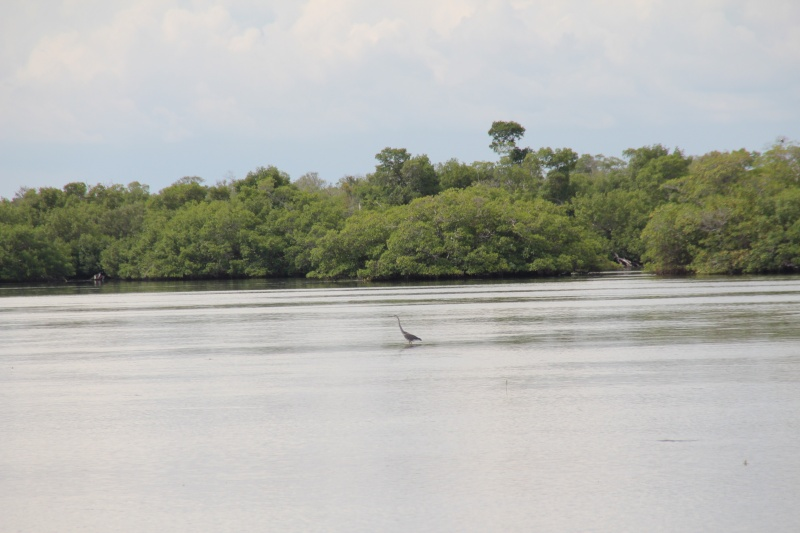 Le merveilleux voyage en Floride de Brenda et Rebecca en Juillet 2014 - Page 20 4013