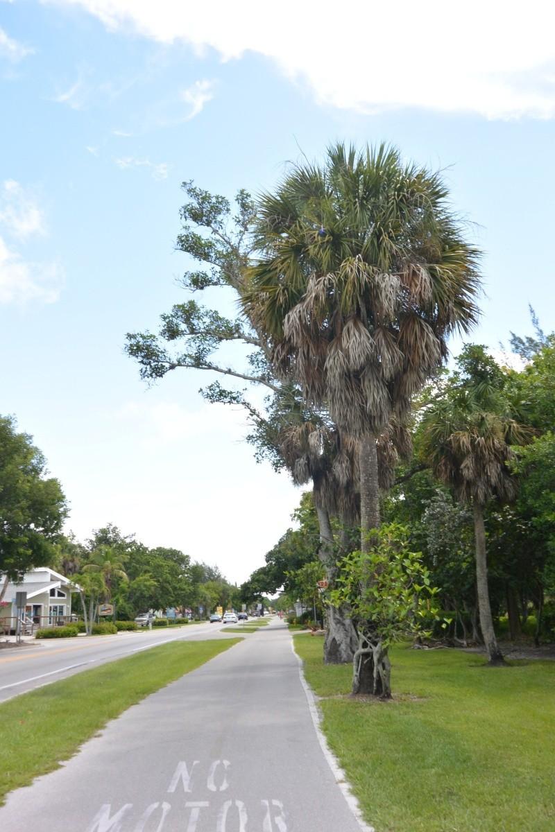 Le merveilleux voyage en Floride de Brenda et Rebecca en Juillet 2014 - Page 20 4312