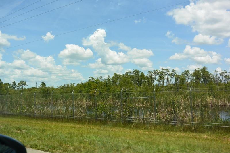 Le merveilleux voyage en Floride de Brenda et Rebecca en Juillet 2014 - Page 19 5010