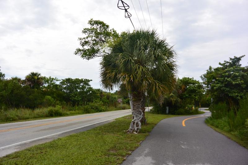 Le merveilleux voyage en Floride de Brenda et Rebecca en Juillet 2014 - Page 20 5812
