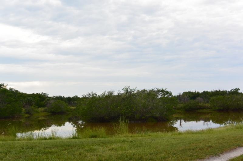 Le merveilleux voyage en Floride de Brenda et Rebecca en Juillet 2014 - Page 20 6811