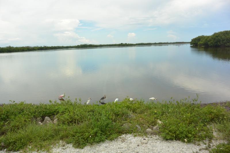 Le merveilleux voyage en Floride de Brenda et Rebecca en Juillet 2014 - Page 20 7512
