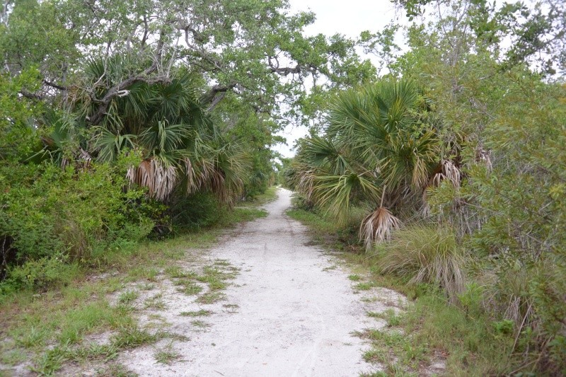 Le merveilleux voyage en Floride de Brenda et Rebecca en Juillet 2014 - Page 19 8510