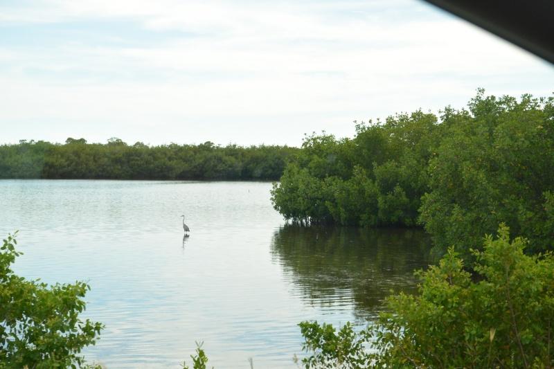 Le merveilleux voyage en Floride de Brenda et Rebecca en Juillet 2014 - Page 20 8811