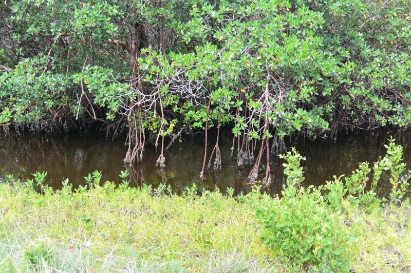 Le merveilleux voyage en Floride de Brenda et Rebecca en Juillet 2014 - Page 20 9011