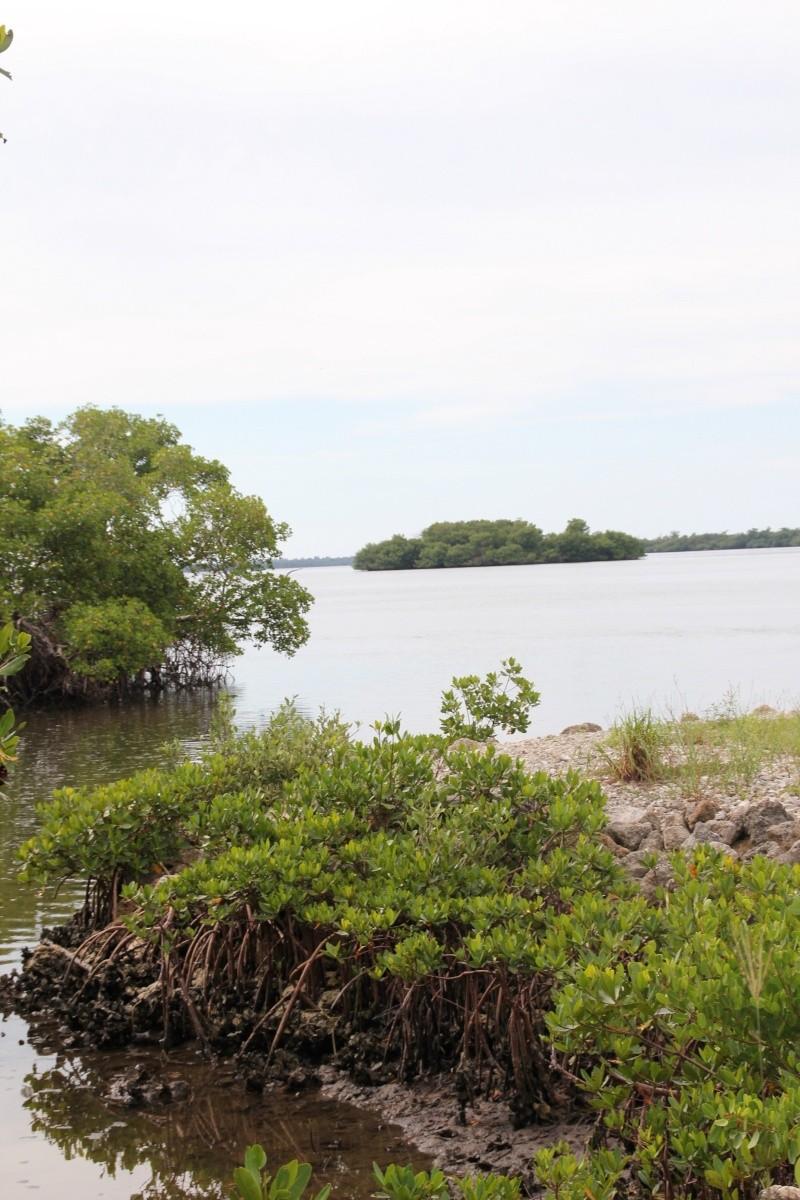 Le merveilleux voyage en Floride de Brenda et Rebecca en Juillet 2014 - Page 20 9511