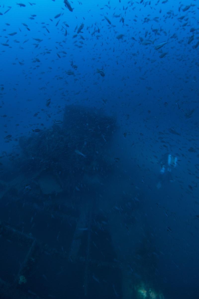 Mes dernières plongées Marseillaises _dsc3711