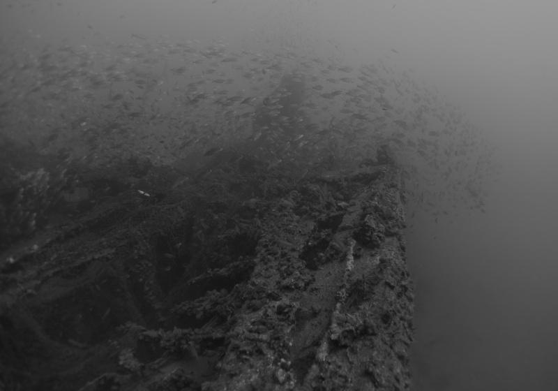 Mes dernières plongées Marseillaises _dsc3719