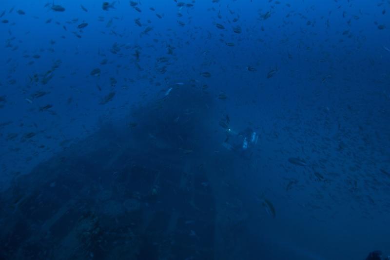 Mes dernières plongées Marseillaises _dsc3720