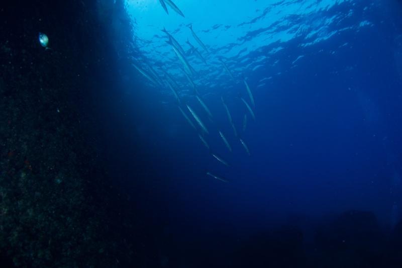 Mes dernières plongées Marseillaises _dsc3819