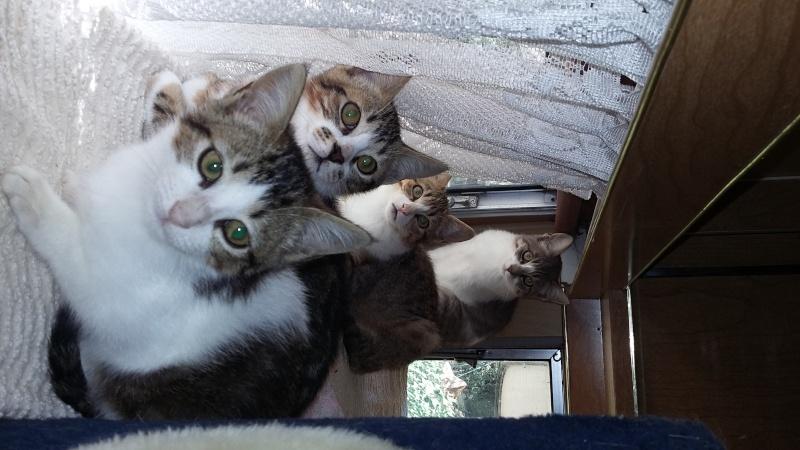 URGENT - Recherche prise en charge asso/refuge pour 5 chatons d'un site de chats libres (Bretagne - 35) 20150810