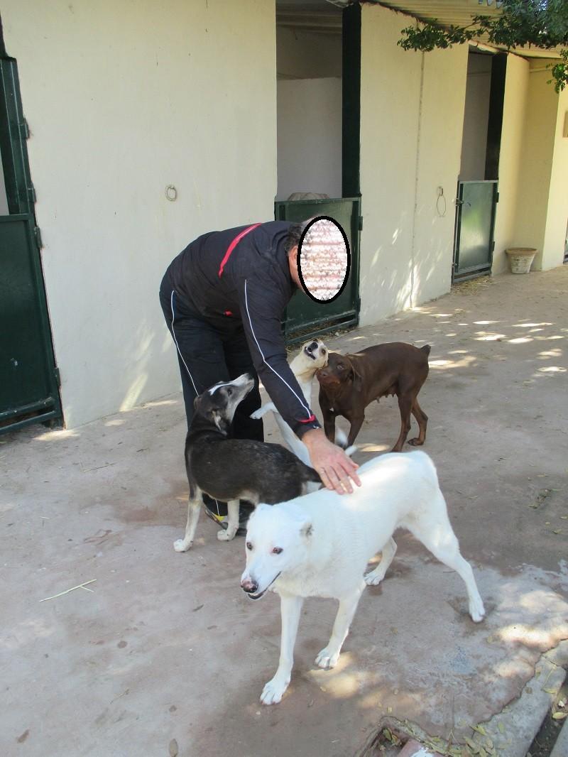 TROIS jeunes chiennes de Tunisie J-c_et10