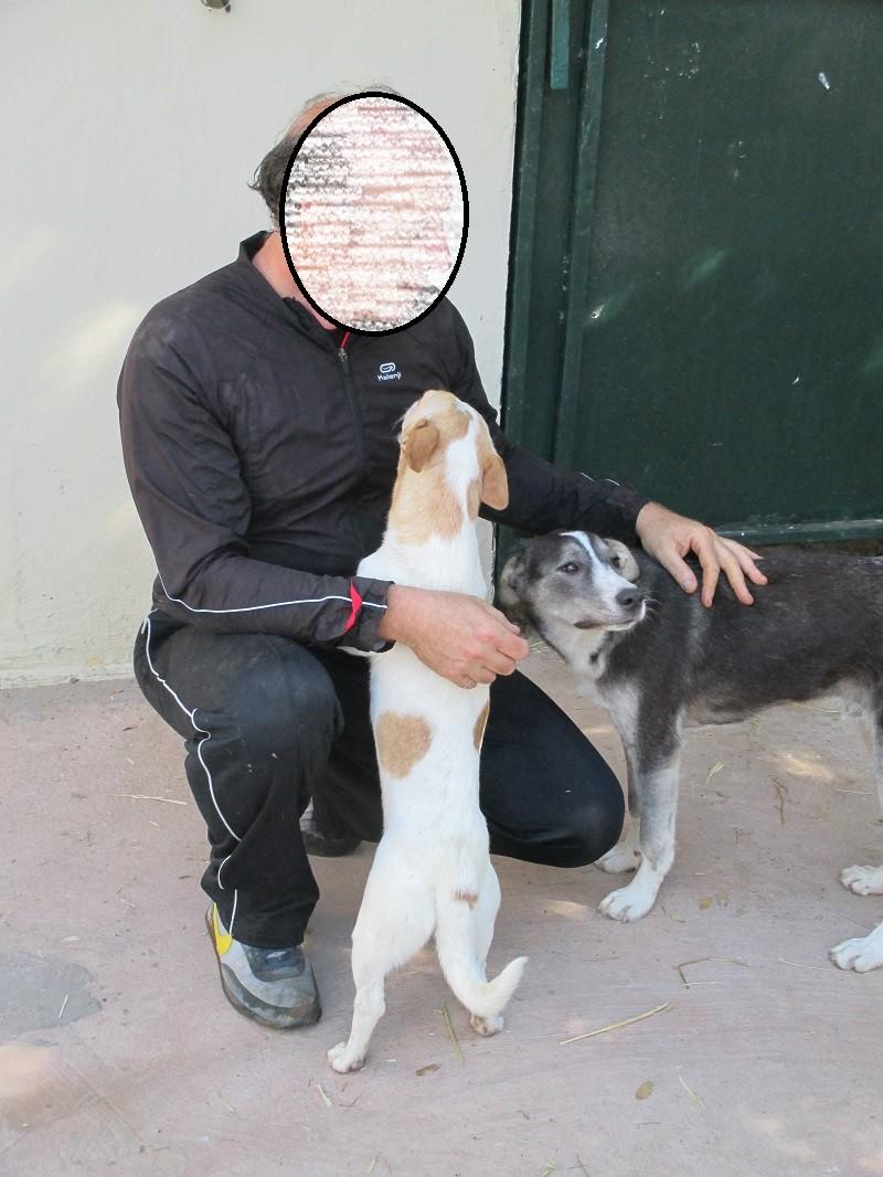 TROIS jeunes chiennes de Tunisie J-c_et11