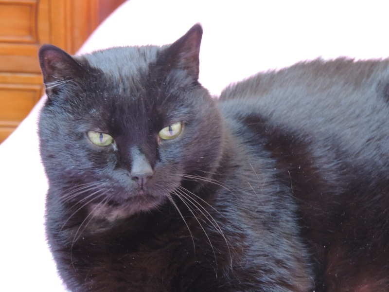 AKTARUS, mâle européen noir, né en 2005 Dscn2710
