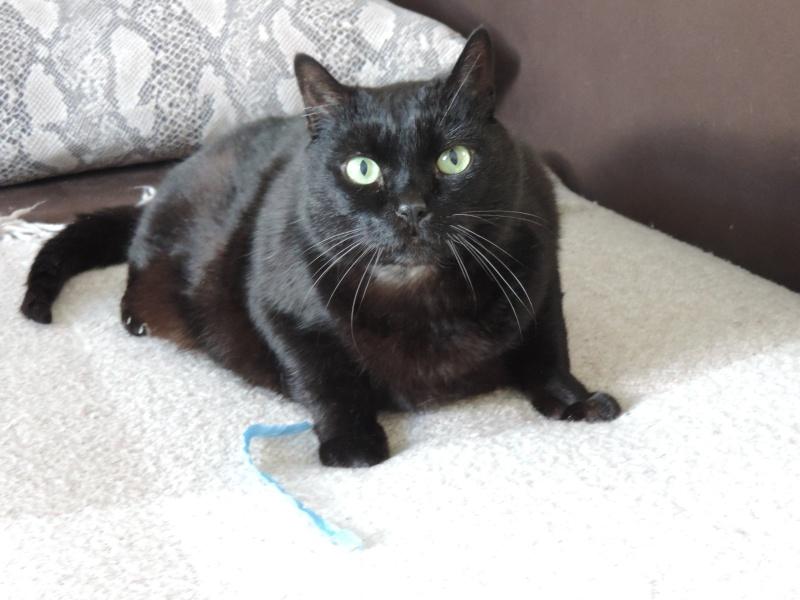 AKTARUS, mâle européen noir, né en 2005 Dscn2713