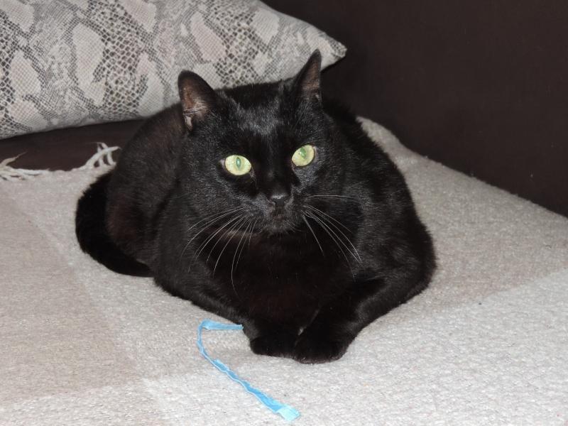 AKTARUS, mâle européen noir, né en 2005 Dscn2714