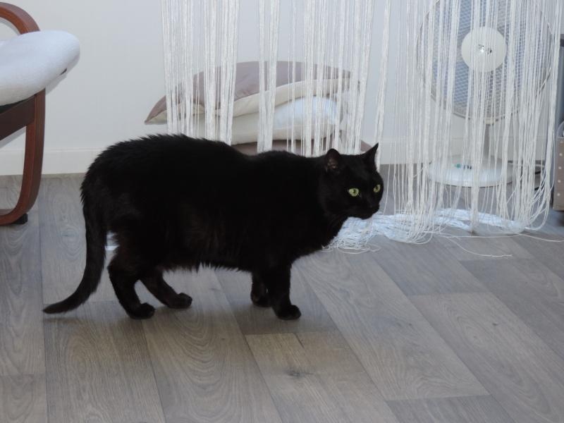 AKTARUS, mâle européen noir, né en 2005 Dscn2715
