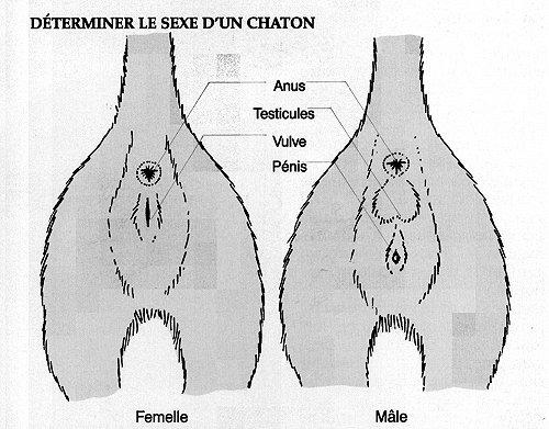 Male ou femelle ? Sexe_c11