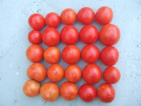 """Concours """"fruits et légumes"""" - Page 2 Dscf6910"""