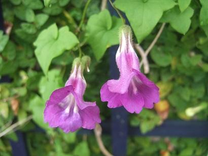 butinages du jour à l'ombre de nos plantes  - Page 4 Dscf7018