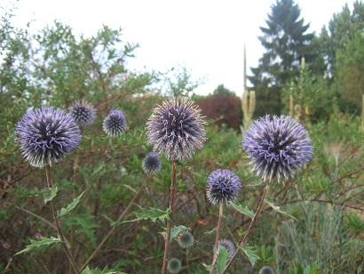 butinages du jour à l'ombre de nos plantes  - Page 4 Dscf7110