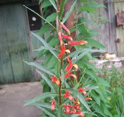 butinages du jour à l'ombre de nos plantes  - Page 5 Dscf7125