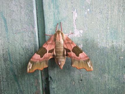 fil(et) à papillons - Page 6 Dscf7223
