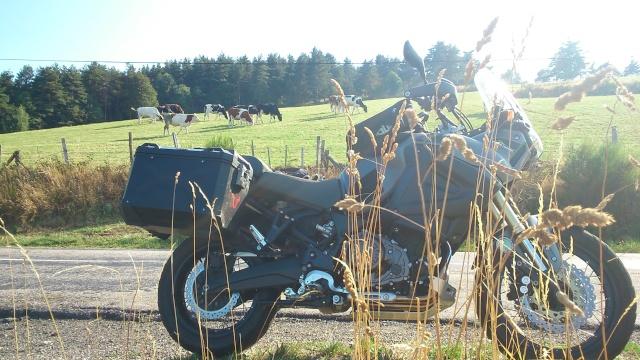 Vos plus belles photos de moto - Page 4 Dsc_1512