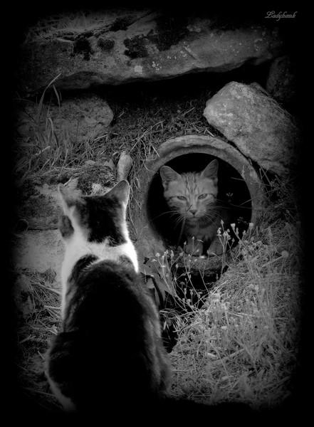 les chats Img_3811