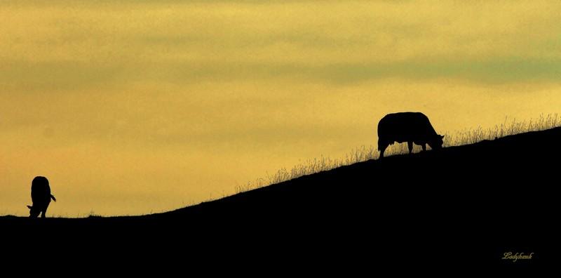 la prairie Img_4810