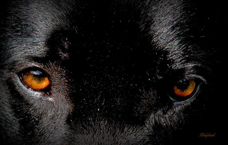 les yeux de Jade Img_5410