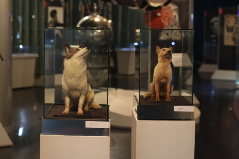STREET VIEW : les musées en visite virtuelle - Page 8 Belka-10