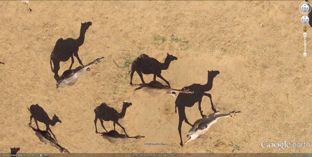 En Afrique avec le National Geographic Magazine - Page 2 Dromad10