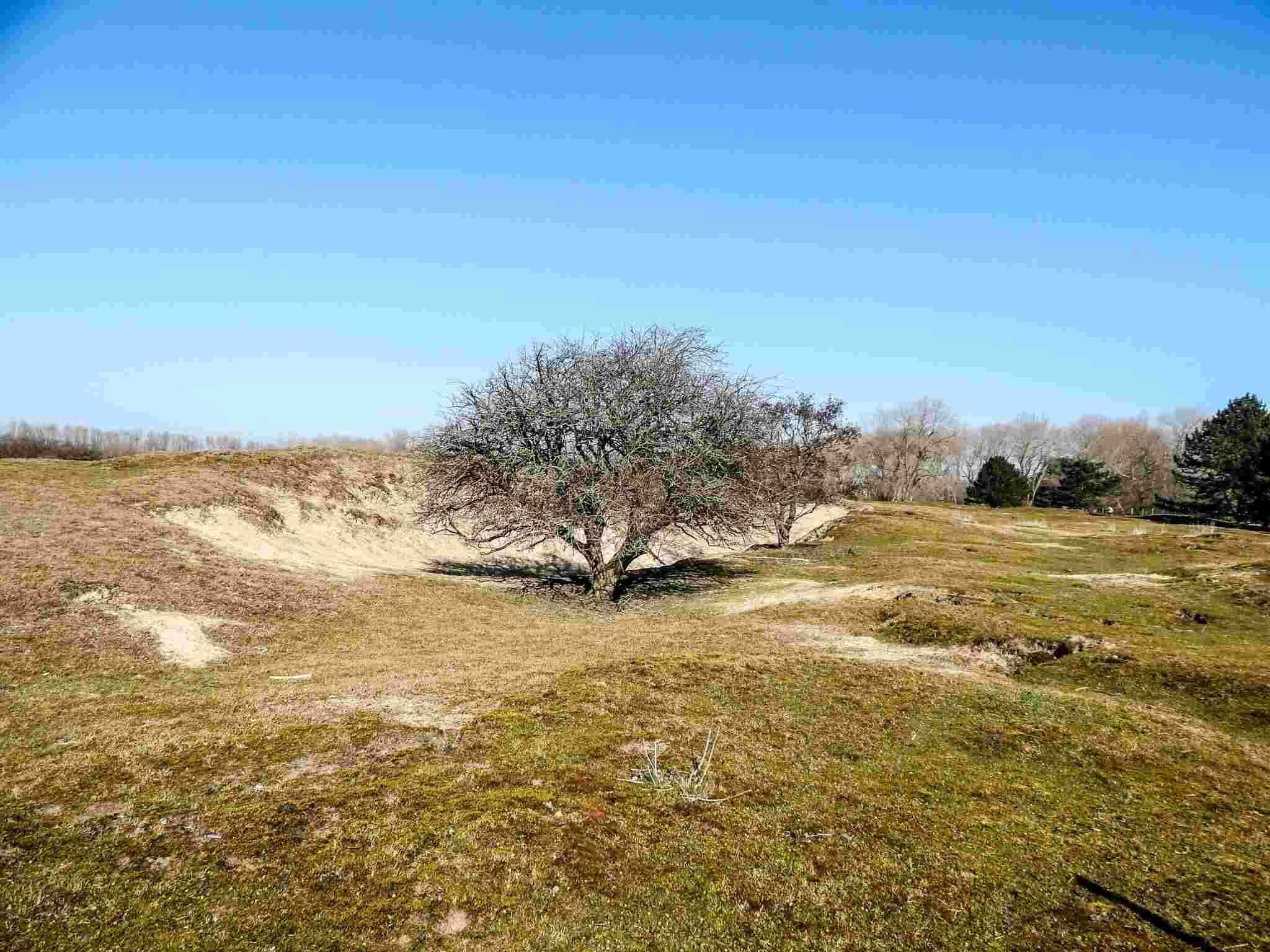 La dune fossile de Ghyvelde en France. Dscn1521