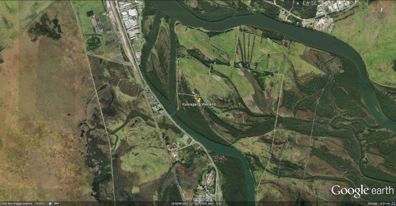 La mangrove à Kooragang, Ash Island, dans le parc national Hunter Wetlands , en Australie. Koorag10