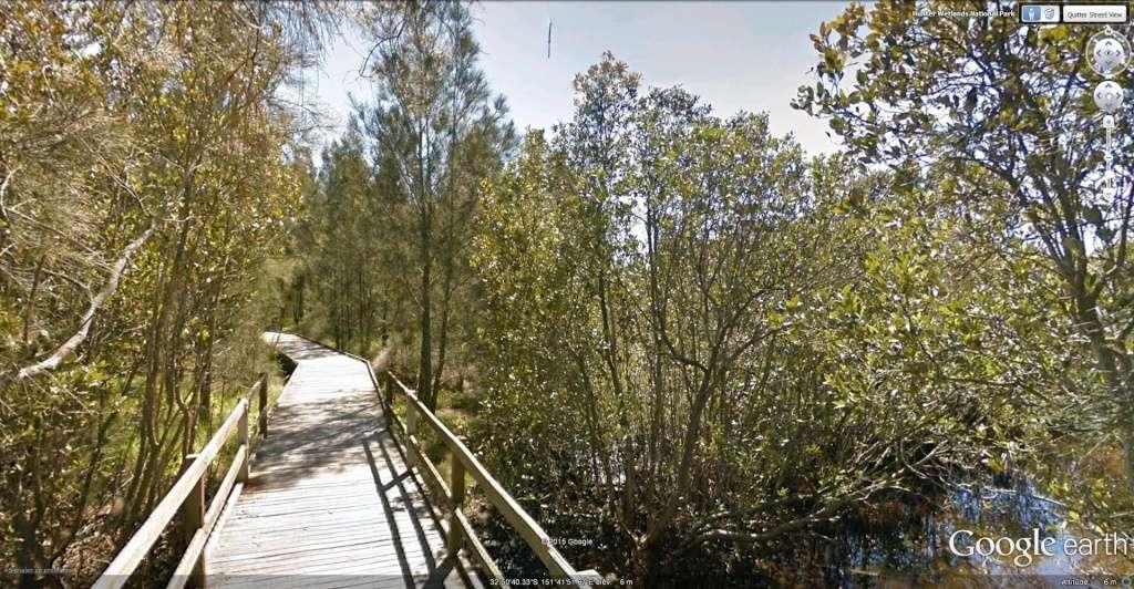 La mangrove à Kooragang, Ash Island, dans le parc national Hunter Wetlands , en Australie. Koorag13
