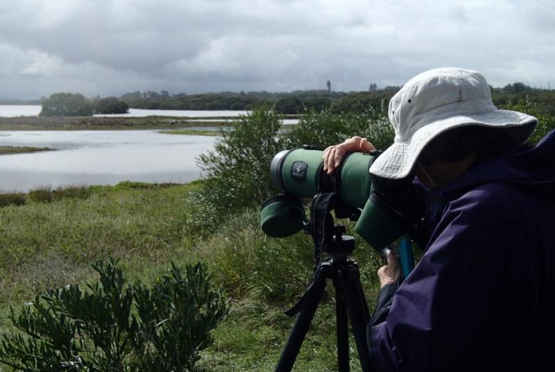 La mangrove à Kooragang, Ash Island, dans le parc national Hunter Wetlands , en Australie. P4220310