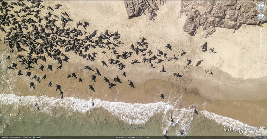 En Afrique avec le National Geographic Magazine - Page 3 Phoque10