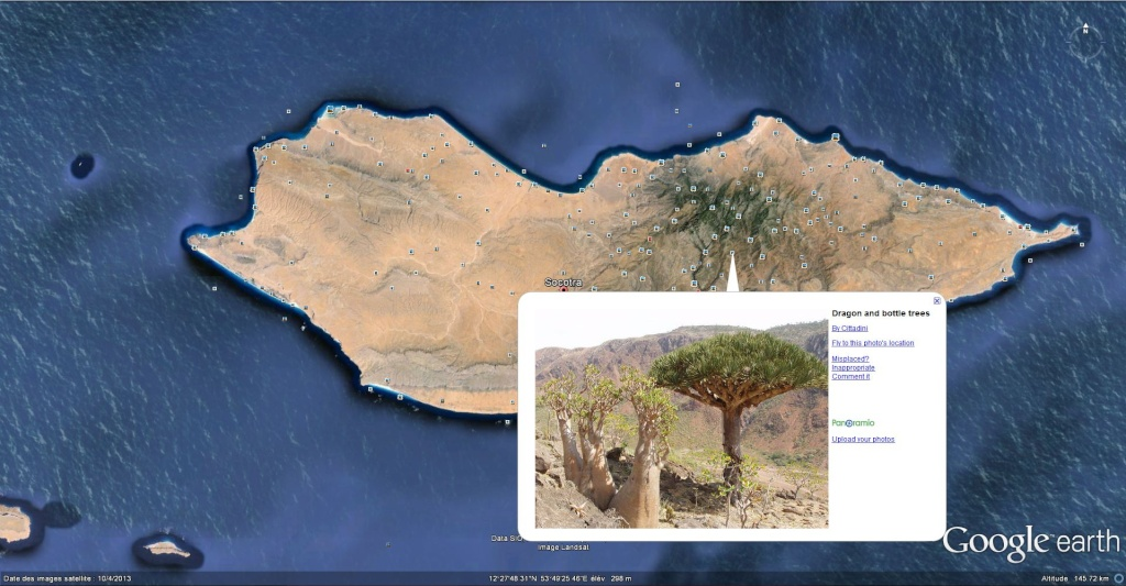 Dragonnier de Socotra au Yémen. Socotr10