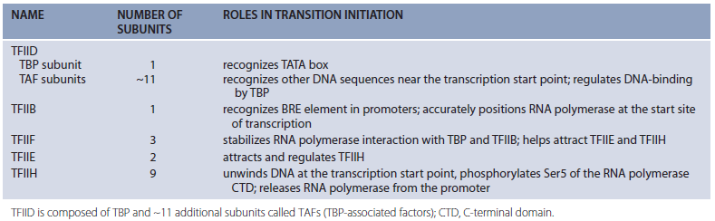 The complexity of  transcription through RNA polymerase enzymes  and general transcription factors in eukaryotes 00000011