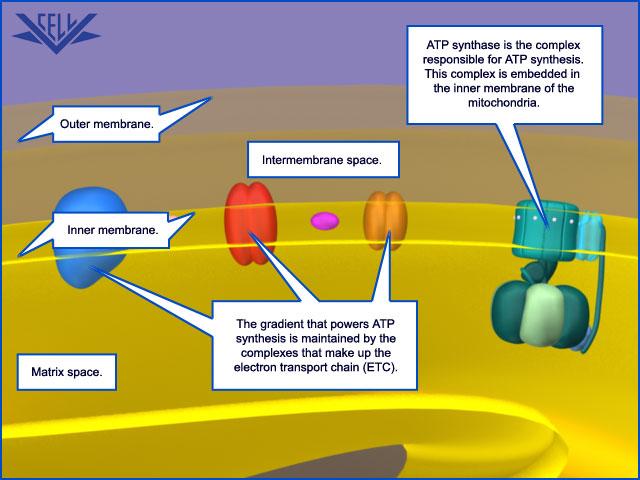 The irreducibly complex ATP Synthase nanomachine, amazing evidence of design 047910
