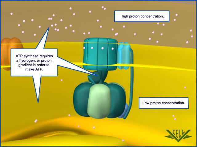 The irreducibly complex ATP Synthase nanomachine, amazing evidence of design 061910