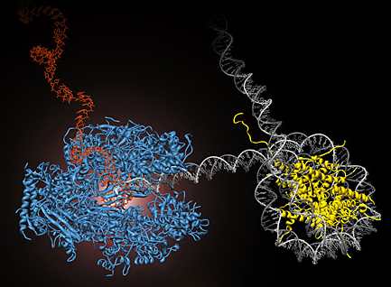 The amazing organisation and design of DNA, genomes, histones, nucleosomes chromosomes 07_30_10