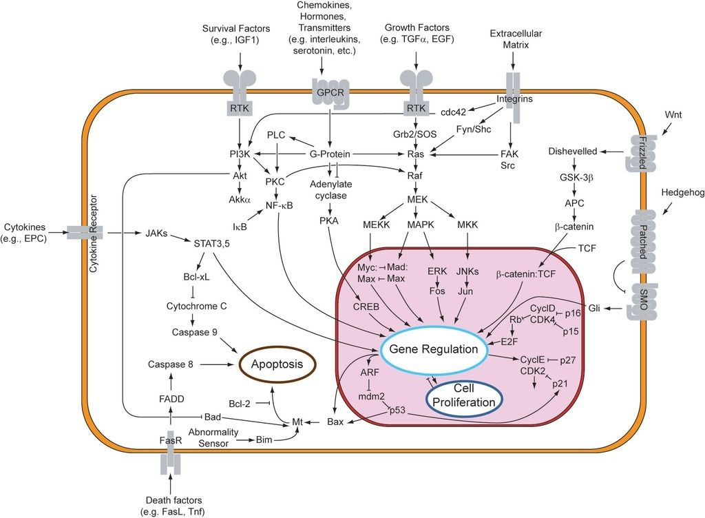 Complexity of the cell's transport and communication system 1024px10
