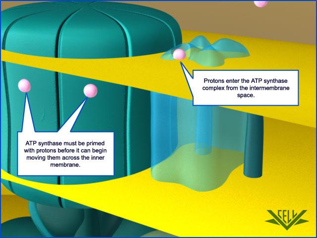 The irreducibly complex ATP Synthase nanomachine, amazing evidence of design 104710